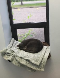Comfy cuddly great cat currled up under a window in the Fusion Pet Retreat cat wing